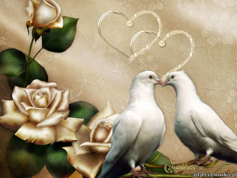 http://i273.photobucket.com/albums/jj205/nblazerdeb2000/Animals/Birds/Birds%20Background/Lovey-Dovey-wpwbxx.jpg