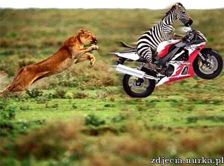 http://toniclaro.to.funpic.de/unter_spass/funpics/funpics/animal_race.jpg