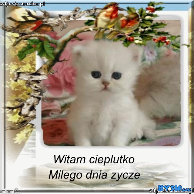 http://www.bysio.com/i/zdjecia.nurka.pl/images/74.50.124.22-image-images2-full-xbbh-1ak-2.jpg