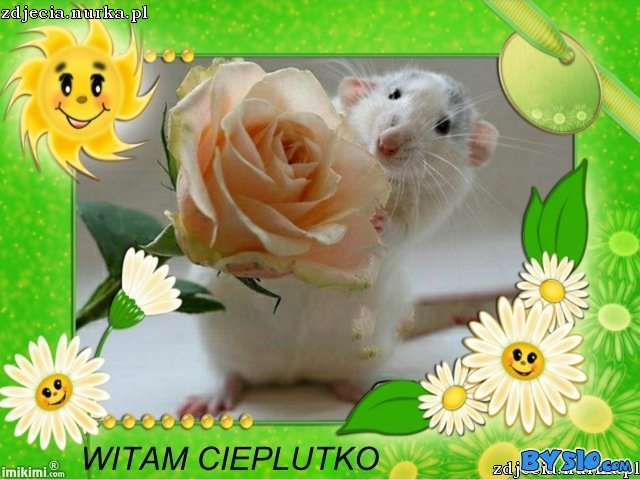 http://www.bysio.com/i/zdjecia.nurka.pl/images/74.50.124.24-image-images2-full-m5pu-2jg-1.jpg