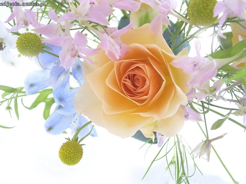http://www.xe-media.ch/demoV3/administrator/components/com_xegallery3/img_pictures/Flowers_-_a_spring_bouquet_with_a_rose.jpg